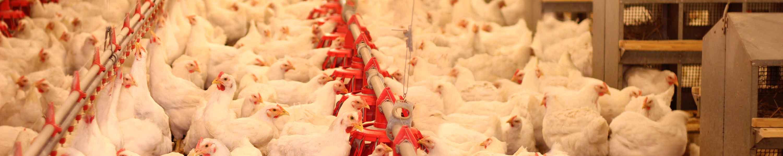 Marimport insumos avícolas